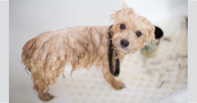 Your Dog May Be Free To Get A Haircut In Michigan But You Re Not Michigan Capitol Confidential